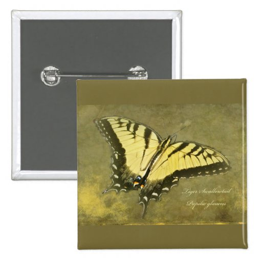 Tiger Swallowtail Butterfly - Papilio glaucus Pins
