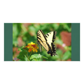 Tiger Swallowtail Butterfly Photo Card
