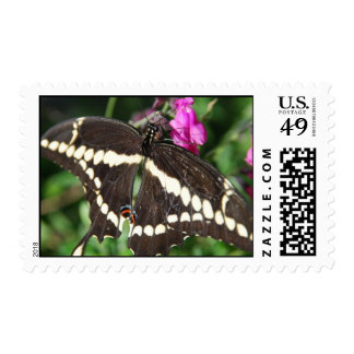 Tiger Swallowtail Butterfly Postage Stamps