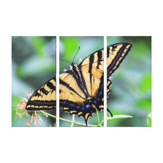 Tiger Swallowtail Butterfly Triptych Wall Art