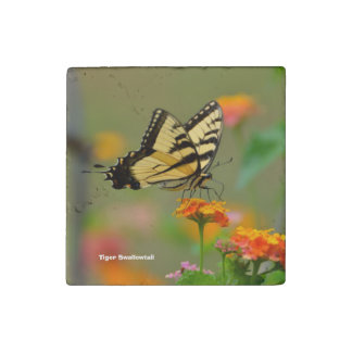 Tiger Swallowtail Buttterfly Stone Magnet