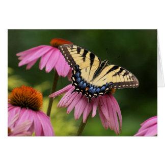 Tiger Swallowtail Card