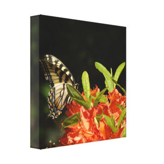 Tiger Swallowtail I Butterfly Canvas