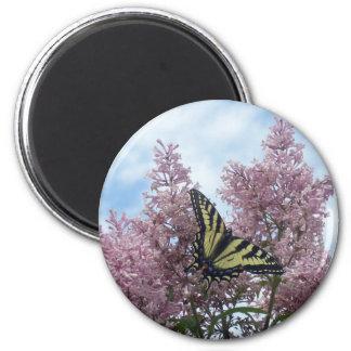 Tiger Swallowtail_lilacs Magnets