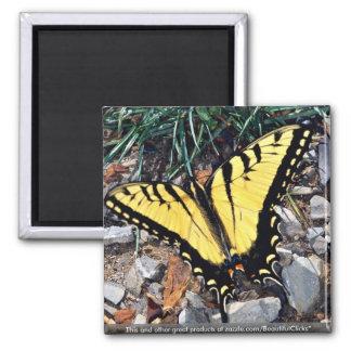 Tiger swallowtail fridge magnet