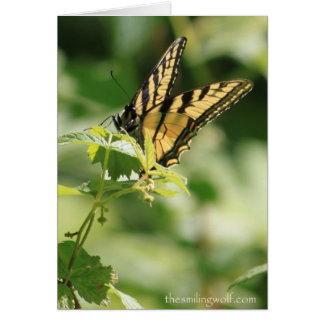 Tiger Swallowtail on a Raspberry Card