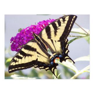 Tiger Swallowtail on Butterfly Bush Postcard