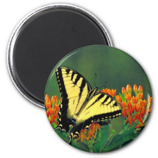 Tiger swallowtail on Butterfly weed Fridge Magnet