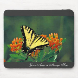 Tiger swallowtail on Butterfly weed Mouse Pad