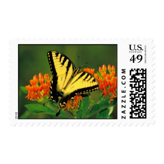Tiger Swallowtail on Butterfly Weed Postage