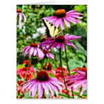 Tiger Swallowtail On Coneflower Card