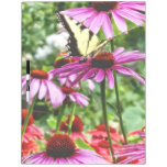 Tiger Swallowtail On Coneflower Dry Erase Board
