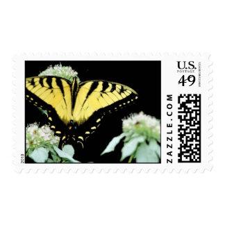 Tiger swallowtail on Mountain mint Stamp