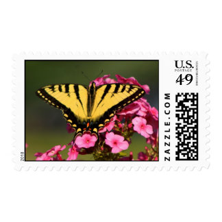 Tiger Swallowtail on Phlox Postage