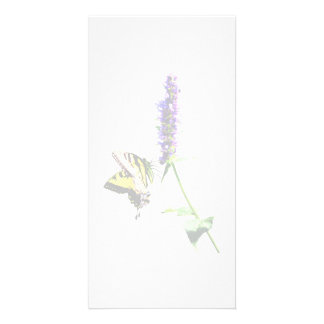 Tiger Swallowtail on Purple Salvia Card