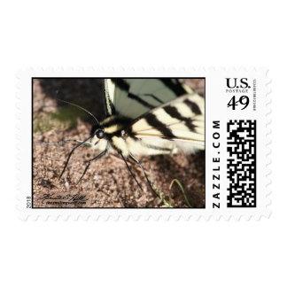 Tiger Swallowtail Stamp
