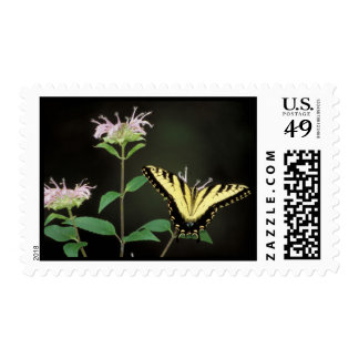 Tiger Swallowtail Stamps