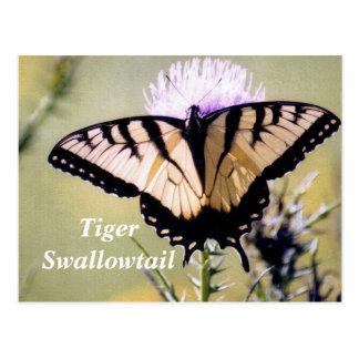 Tiger swallowtail postcard