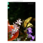 Tiger Swallowtail-Thinking of You Card