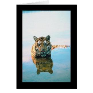 Tiger Swimming Greeting Card