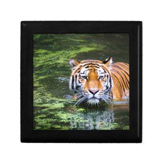 Tiger Swimming Keepsake Box