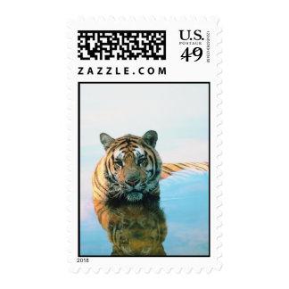 Tiger Swimming Stamp