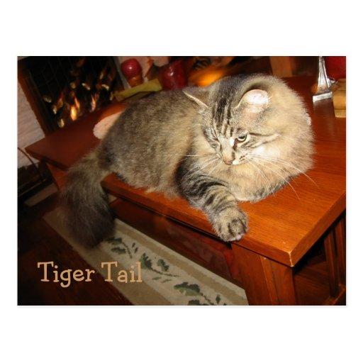 Tiger Tail Postcard