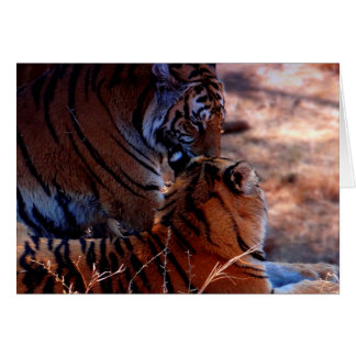 Tiger Tenderness Gifts Card