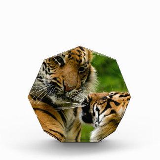 Tiger tiger awards