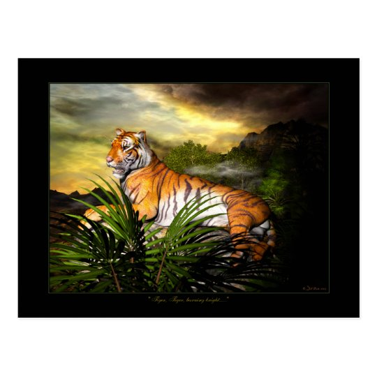 Tiger, Tiger, Burning Bright Postcard
