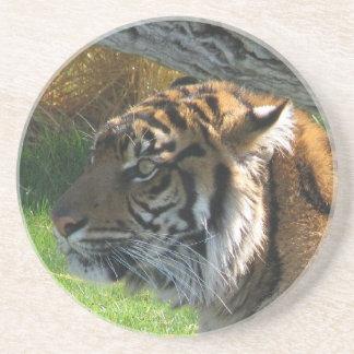 Tiger Tiger Coaster