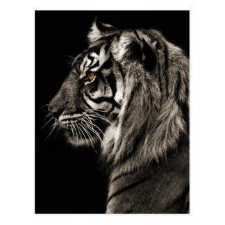 Tiger, Tiger Postcard