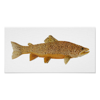 Tiger Trout Art Poster