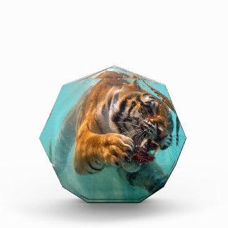Tiger Underwater Awards
