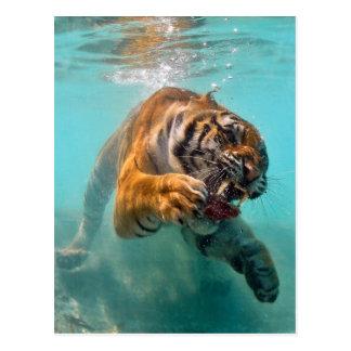 Tiger Underwater Post Cards