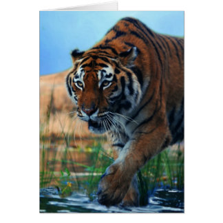 Tiger wading in water card