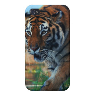 Tiger wading in water case for iPhone 4