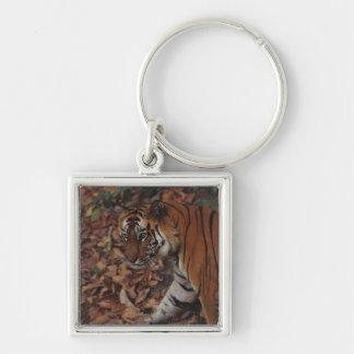 Tiger Walking on Dead Leaves Keychain
