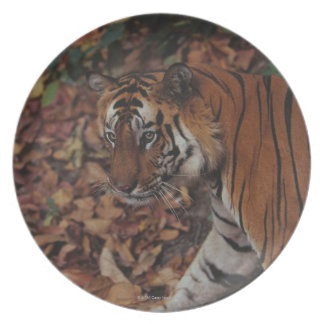 Tiger Walking on Dead Leaves Plates