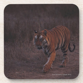 Tiger Walks along Trail Beverage Coaster