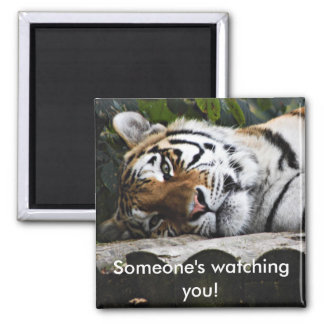 Tiger Watching You Magnet