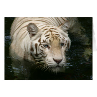 Tiger Water Greeting Cards