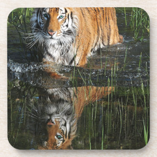 tiger water reflection customize coaster