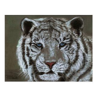 tiger white postcard