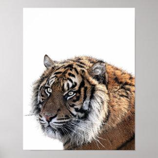 Tiger wild african animal photo nursery kids room poster