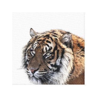Tiger wild african animal photo peekaboo nursery canvas print