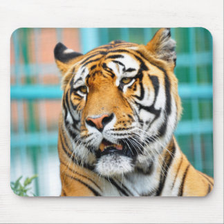 tiger wild animal portrait mouse pads