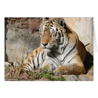 tiger wild animal zoo tigers card