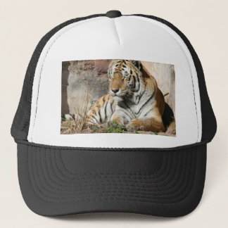 tiger wild animal zoo tigers trucker hat