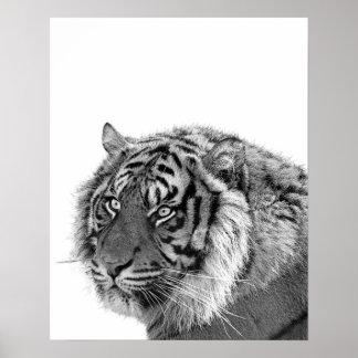 Tiger wild jungle animal photo black and white poster